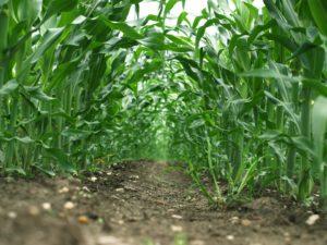 top-10-farming-business-in-nigeria