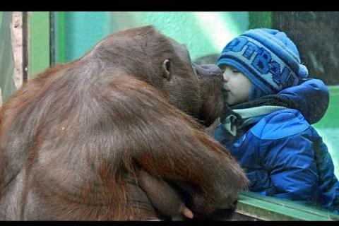 Russia-Zoo